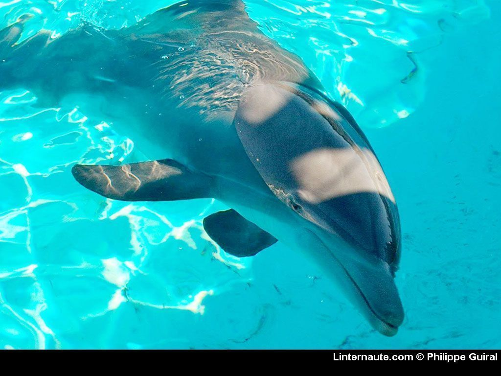 Photo dauphins page 2 - Images dauphins a imprimer ...