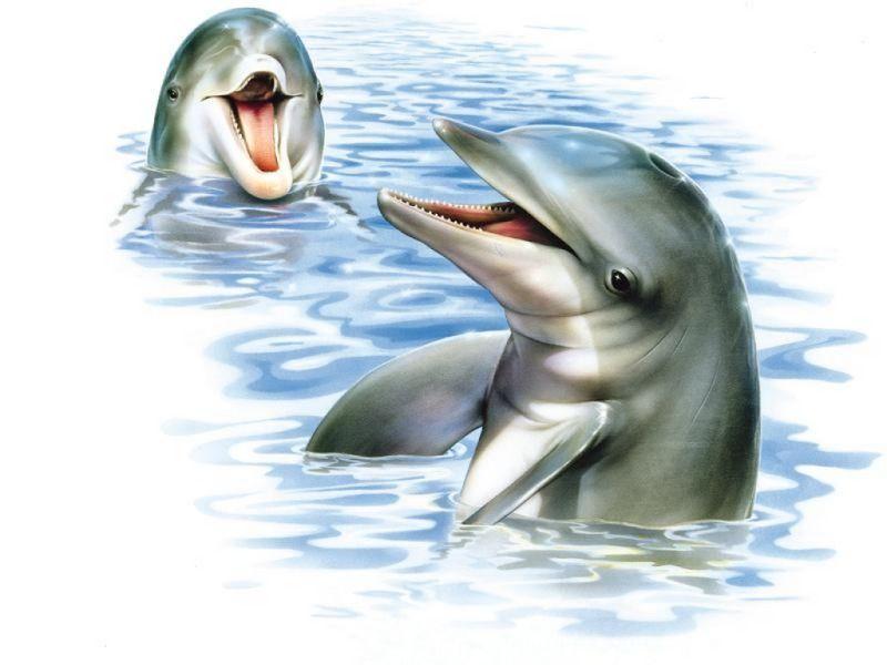 Dessins de dauphins....